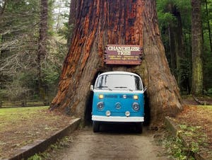 a VW bus driving through a giant redwood tree