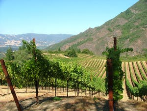 vineyards and rolling hills