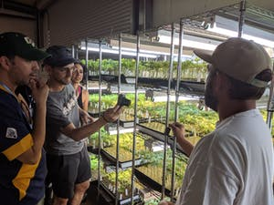 One of the cannasseur weed farmers of The Emerald Triangle showing clones to tourists