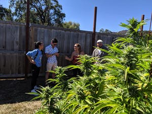 Guests laughing on one of the pot farms in California's Emerald Triangle wioth blooming plants in the foreground
