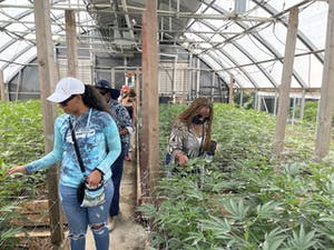Weed tourists explore a greenhouse on a cannabis farm tour of Mendocino farms