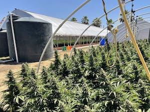 One of the pot farms in California's Emerald Triangle