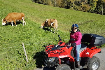 woman on a quad near cows