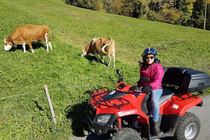 woman on a quad near cows