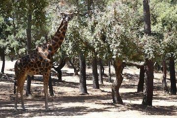 Badoca Safari Park I