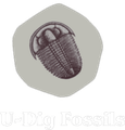 U-Dig Fossils