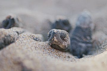 a close up of a turtle lying in the dirt