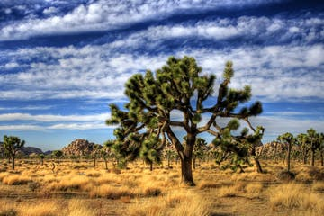 Joshua Tree National Park | Scenery