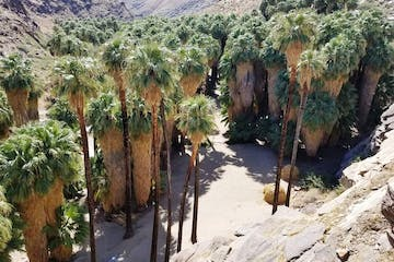 Palm Springs Indian Canyons | Palm Canyon