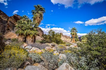 Palm Springs Indian Canyons | Murray Canyon