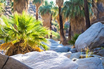 Palm Springs Indian Canyons | Andreas Canyon