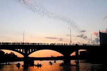 bats flying over congress ave bridge in austin texas