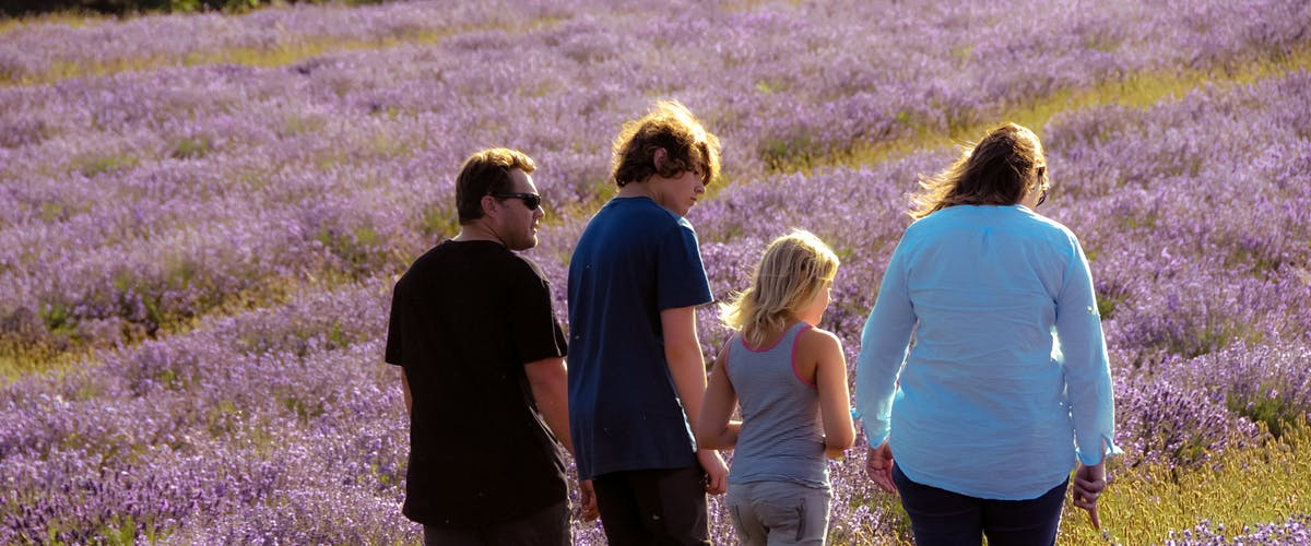family walking through lavender fields