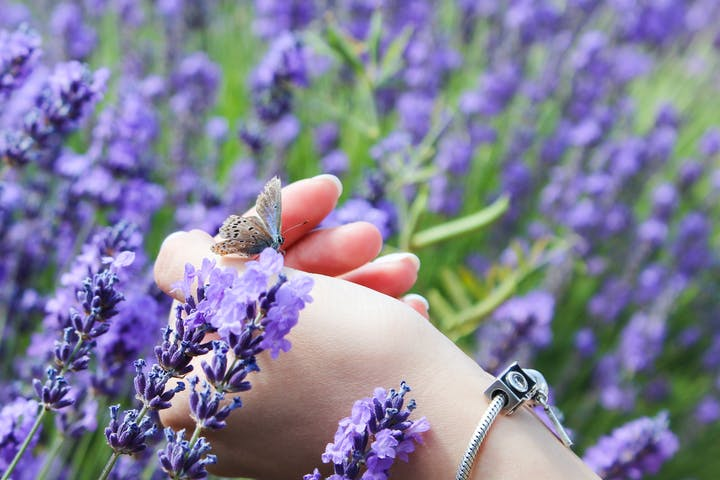 holding a butterfly with the hand