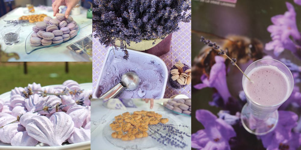 LAVENDER RECIEPES AND DISHES