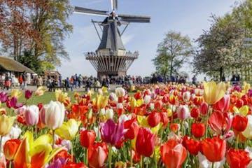 Keukenhof in the Netherlands