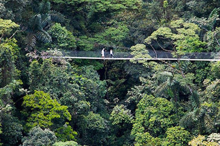 people walking on a suspension bridge over jungle in costa rica