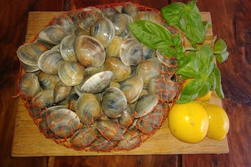 clams and lemons cedar key