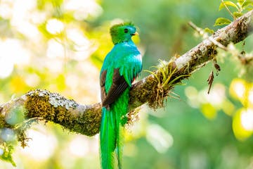 a colorful bird perched on a tree branch