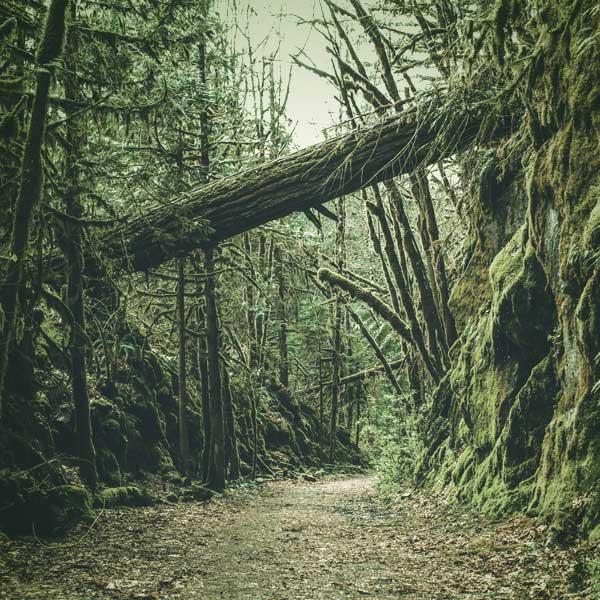 Coastal Mountain rainforest
