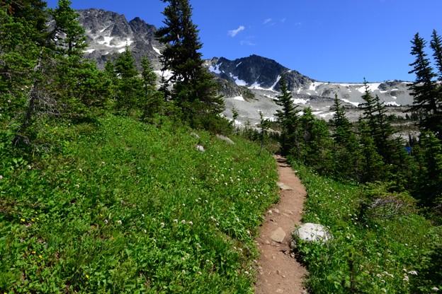 Whistler Alpine view
