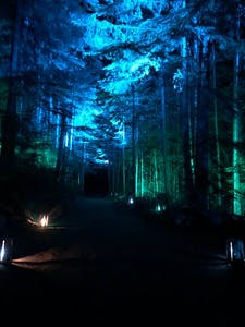 blue and green lights through forest trees
