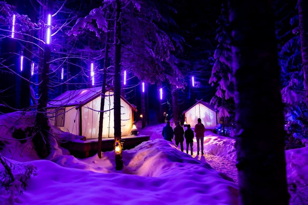Winter purple lighting Vallea lumina night walk.