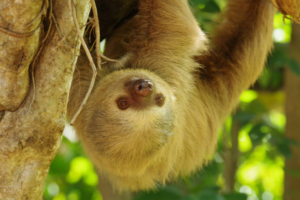 a close up of a sloth