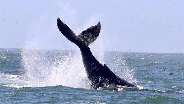 Golden Gate Whale Watch San Francisco Whale Tours