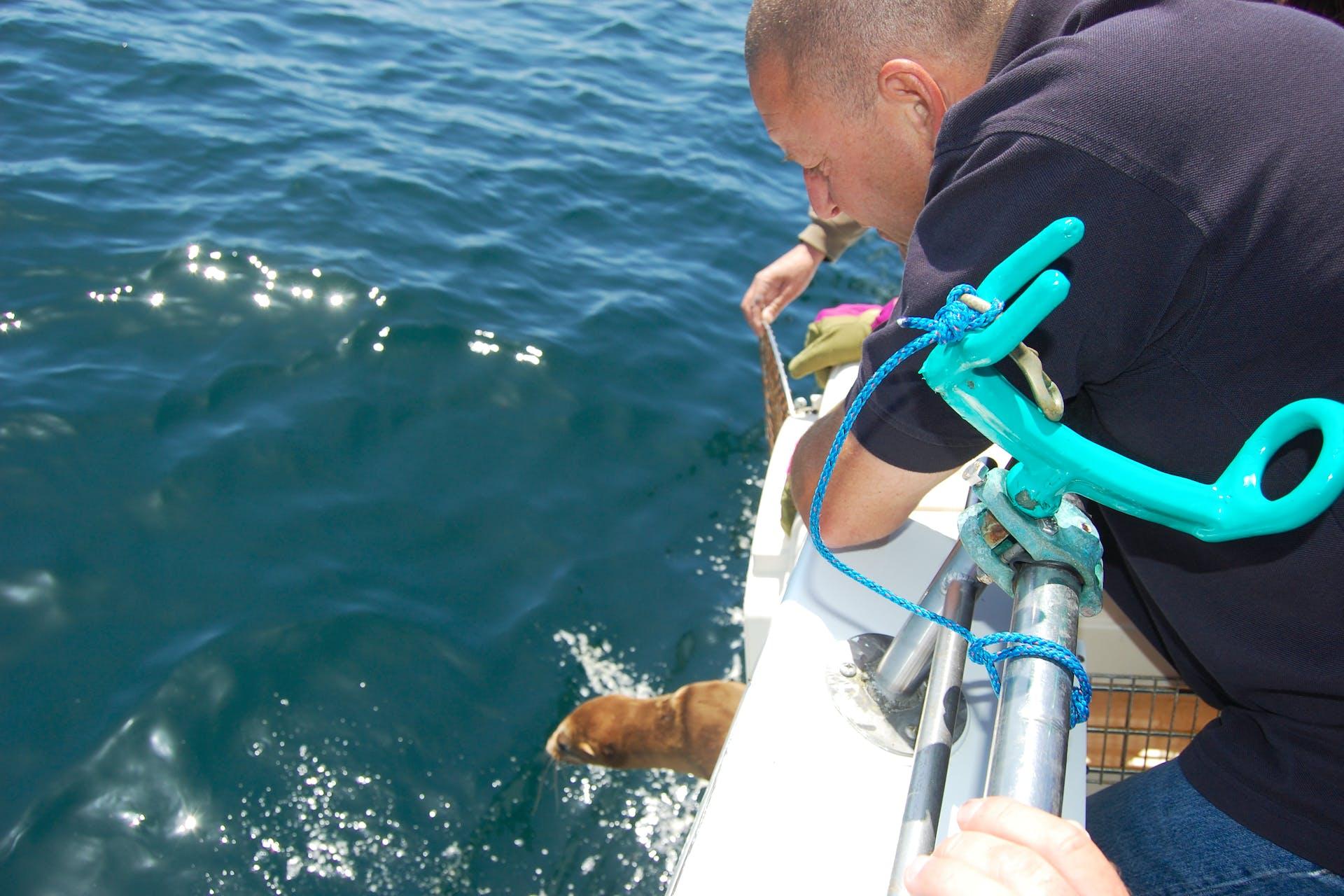 sf whale tours marine mammal center