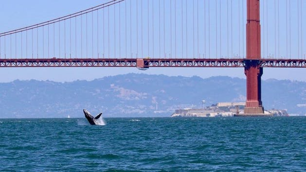San Francisco Whale Tours