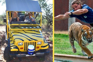 photo collage of jeep and person with a tiger