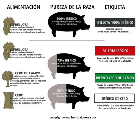 Facts & Quality Secrets for buying Jamon Iberico - Pig purity