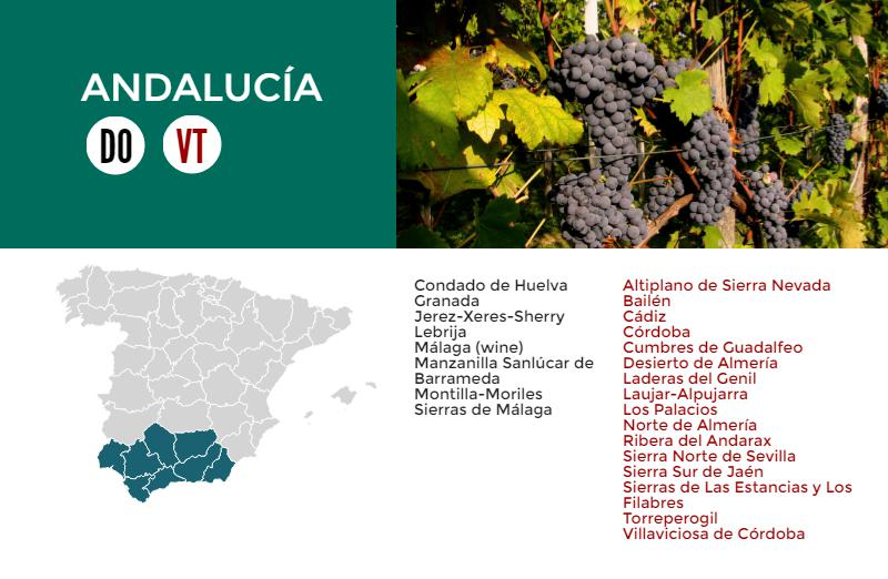 Andalusian Wines Infographic