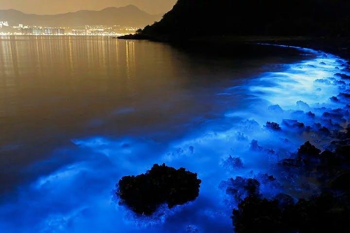 Bioluminescent Plankton at night