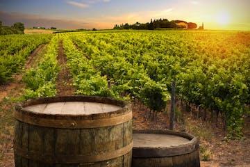 Cata de Vinos - Ribera del Duero