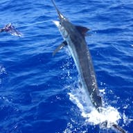 A marlin jumps while fighting on a Bite Me 6 fishing charter