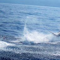 A marlin jumps out of water, battling a fishing charter catch on Bite Me