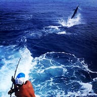 Bite me fishers battle a marlin on this fishing charter