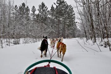 first person view of dog sledding