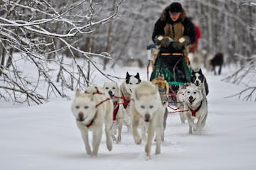 dogs sledding in the snow