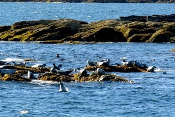 a flock of birds sitting on a rock next to a body of water