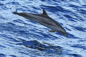 a dolphin swimming in a body of water