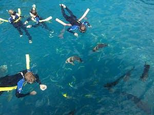 Snorkelling off Prima