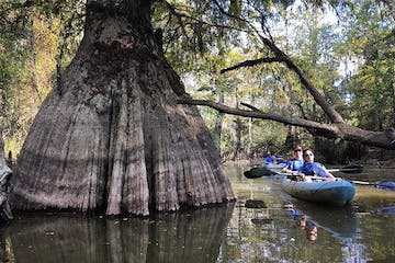 a person riding on the back of a boat next to a tree