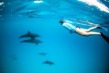person swimming underwater with dolphins