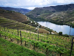 Douro Valley Tours Sightseeing