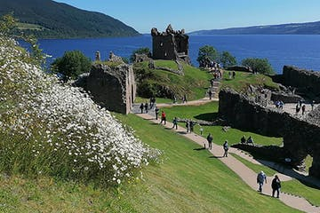 a herd of sheep walking across a lush green hillside with Urquhart Castle in the background