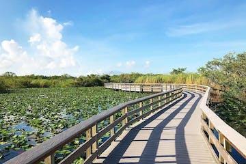 wooden walking bridge over water of Everglades