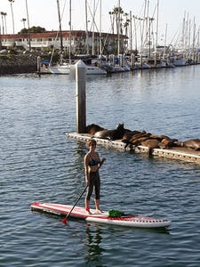 oona tibbetts stand up paddle boarding in oceanside harbour with sealions